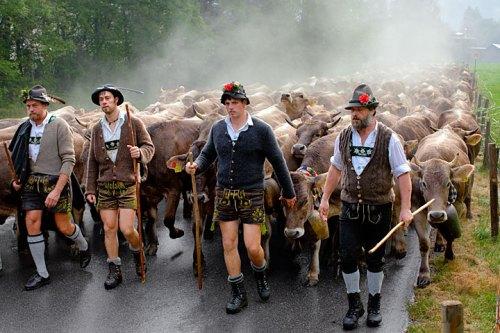 Die treibenden Kräfte des Bad Hindelanger Viehscheids: Herbert Martin und seine Helfer Albi Lipp, Sohn Michael und Andreas Wolf (v.l.) auf dem Weg ins Dorf