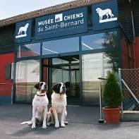 Geliebte Schnüffler: das Bernhardiner-Museum in Martigny.
