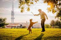 Sprunghaft: Vor der Kulisse des mit schwarzen Riesenbabys übersäten Prager Fernsehturms ist nicht ganz klar, wer im Parukářka-Park trainiert wird: Hund oder Herrchen.