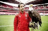 Vogelfrei: Benfica-Falkner André Rodrigues mit Gloriosa, einem der beiden Adler des Fußballvereins
