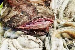 Scheußlich schön: Seeteufel, Oktopus, Sepia und Taschenkrebs auf dem Mercado da Ribeira