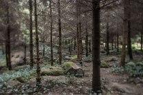 Der Wald der Vogesen war eine Reminiszenz des Bankiers an seine Heimat.