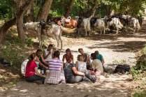 Beim Mittagspicknick ruhen die Tiere, während wir Reiter uns mit Ciabatta, Käse, Fenchelsalami und Pfirsichen stärken.