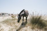Pferd beim Club 7 bei Tarifa