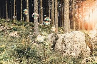 """""""Klangwald"""" im Val di Fiemme, wo Mario Brunello ein Baum gewidmet ist."""